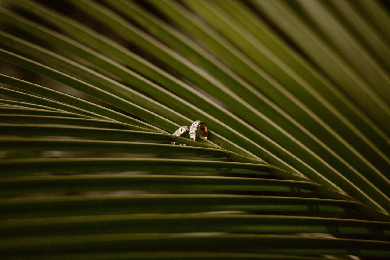 Obrączki ślubne na liściu palmy