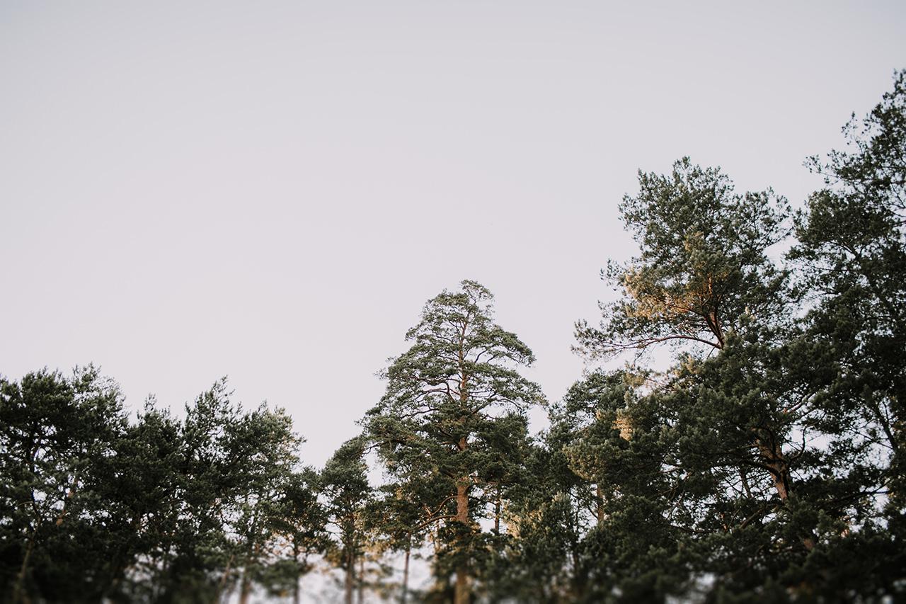 Fotograf ślubny w lesie w Zwierzyńcu